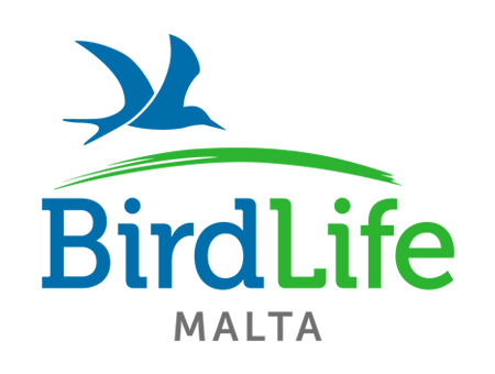 Image result for birdlife