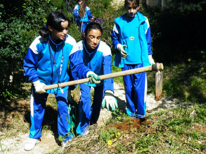 07 Planting rosemary
