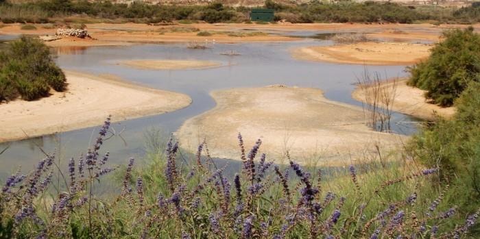 ghadira nature reserve birdlife malta