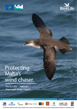 Yelkouan Shearwater Project Layman's report EN - front cover image