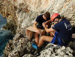 Yelkouan Shearwater Seabird Nestbox Malta