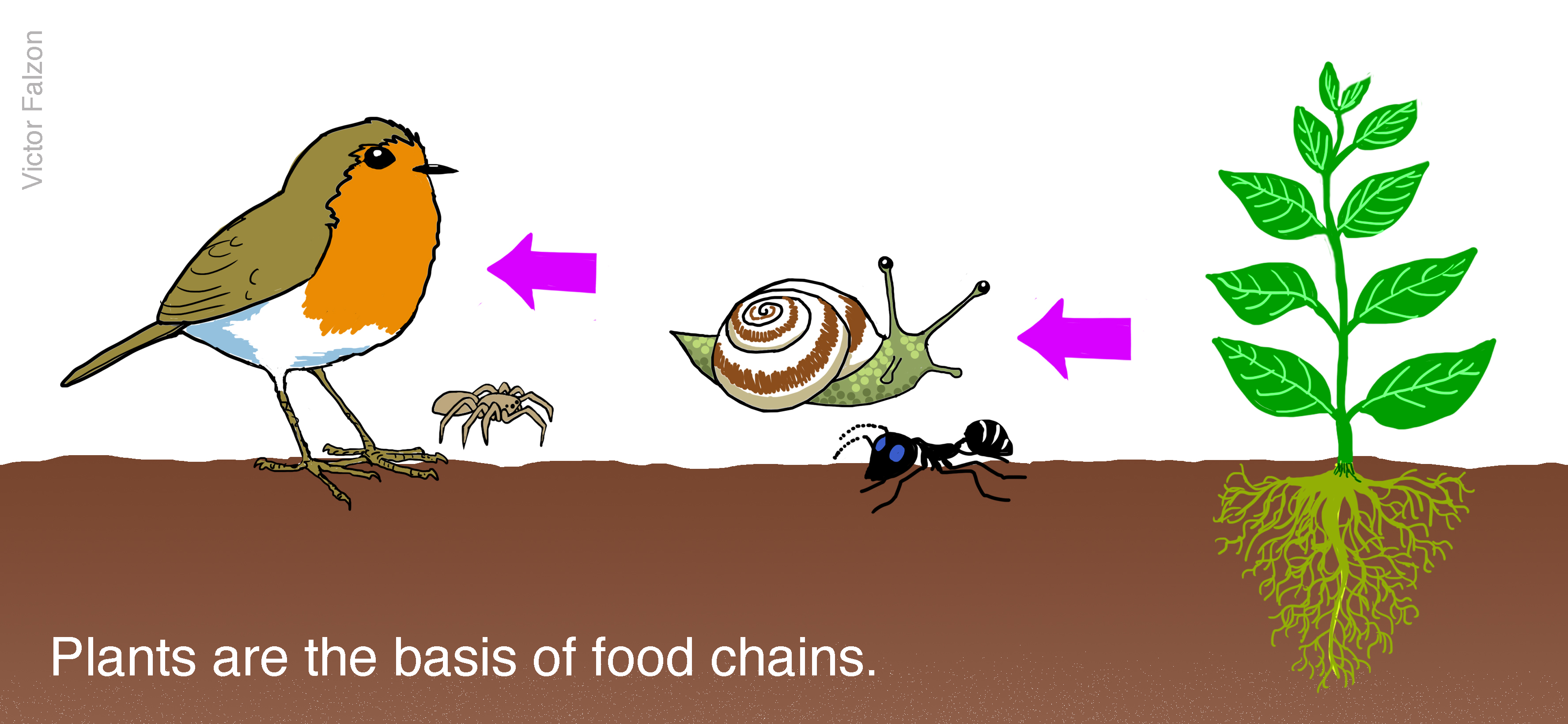 Plants are the basis of food chains.