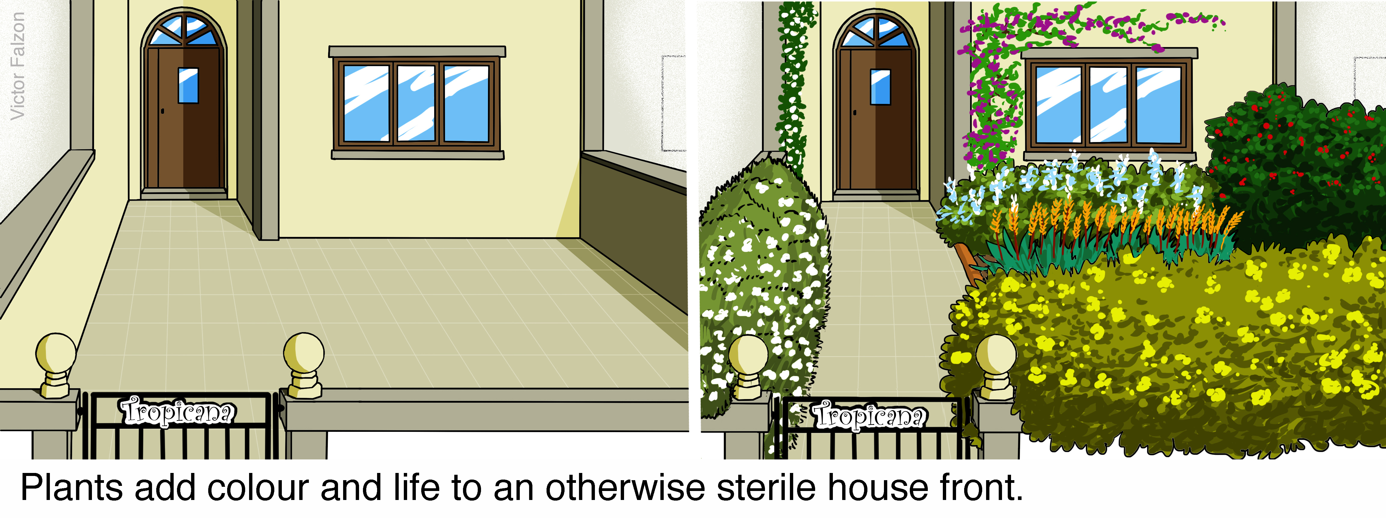 Plants add colour and life to an otherwise sterile house front.