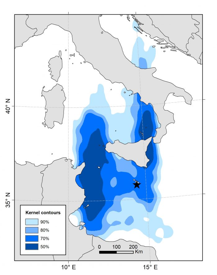 Map of distribution of Mediterranean Storm-petrels during the non-breeding period