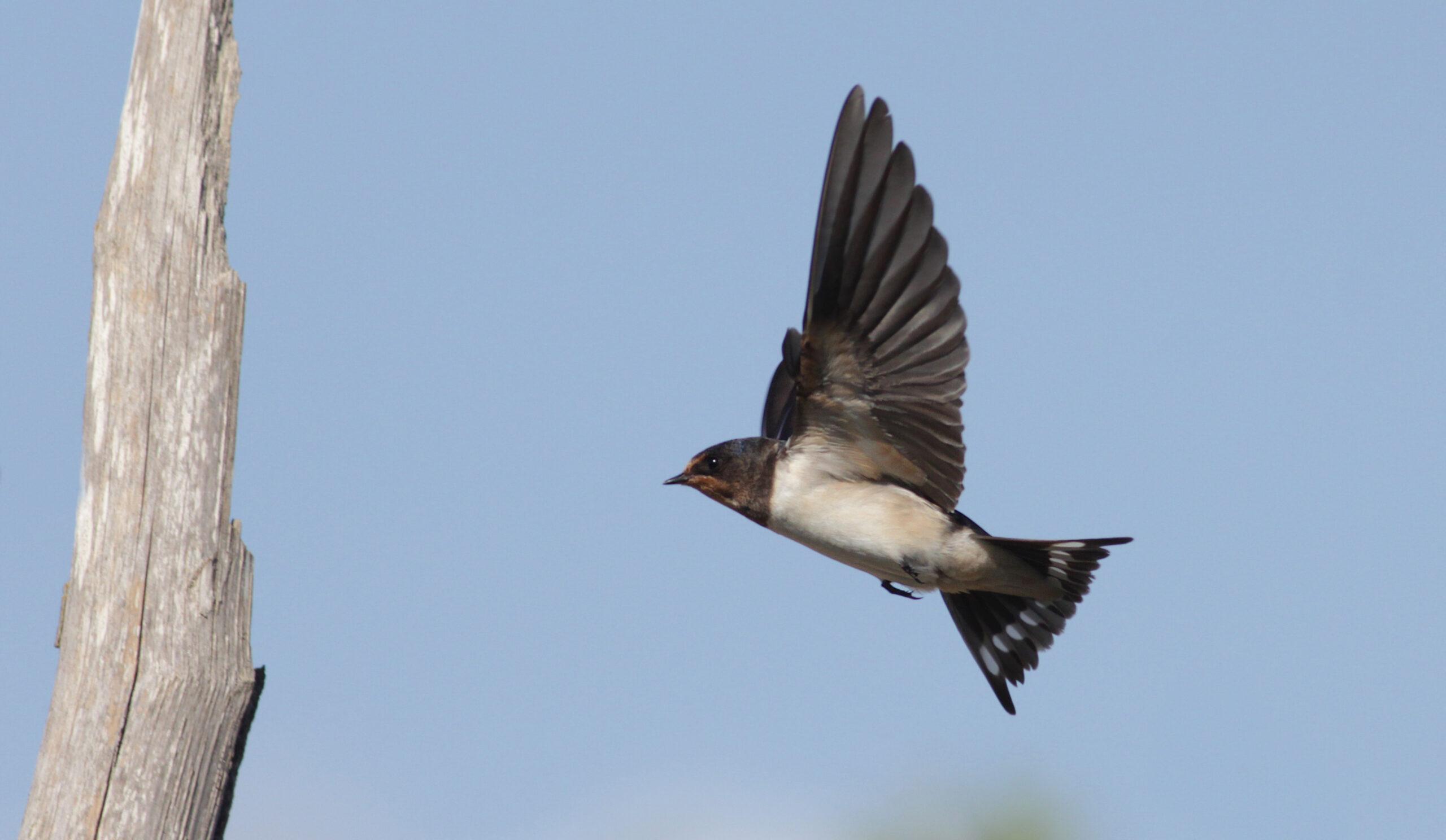 Spring Alive - BirdLife Malta